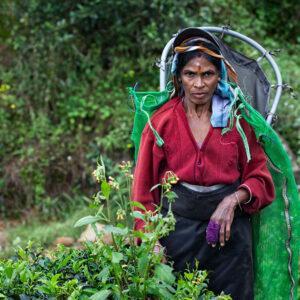 Progetto fotografico le madri di Ceylon di Francesca Guarnaschelli contadina