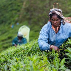 Progetto fotografico le madri di Ceylon di Francesca Guarnaschelli nel verde